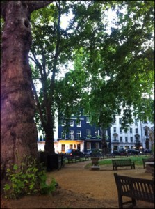 Berkley Square Trees